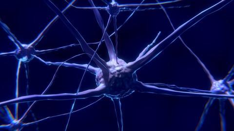 sylvipnose - cerveau